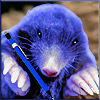 Sadly, our friend and correspondent the Blue Mole is no linger with us.