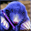 Snippets Feb 2013 Blue Mole is Back